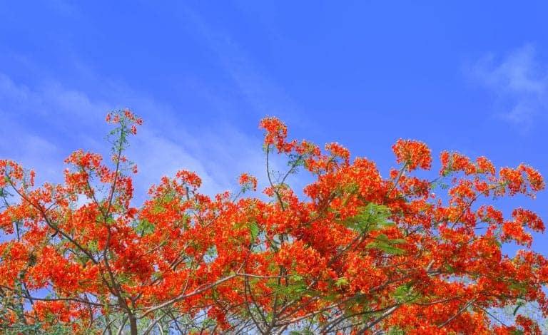 Kortingen op bomen en fruitbomen