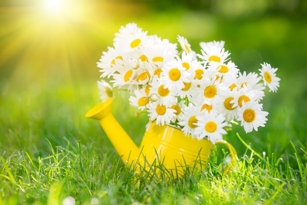 Je tuin voorbereiden op de lente
